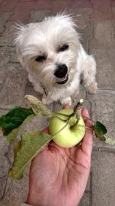 Veggie dog3