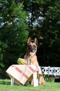 Veggie dog4
