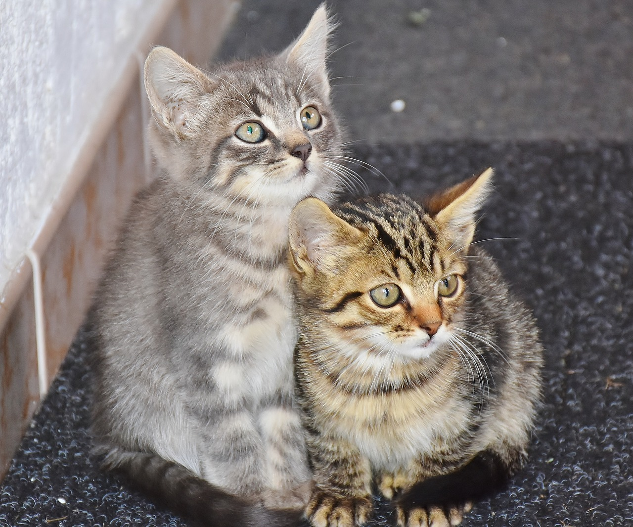 Understanding FIP–And How You Can Help Cure this Deadly ...