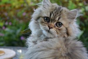 kitten-mill1