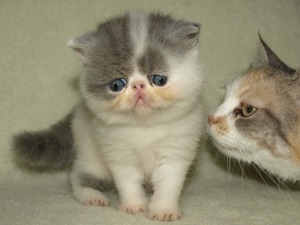 kitten-mill2