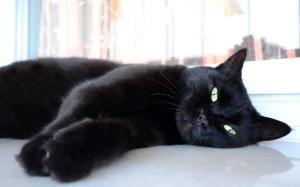 black-cat2