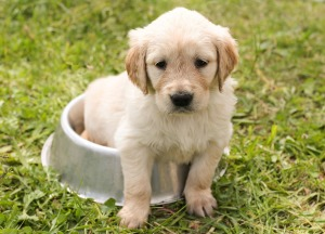 dog-bowl-puppy