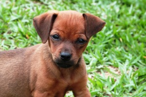 puppy-sad2