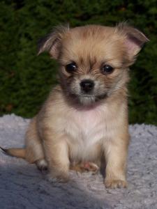 puppy-sad3