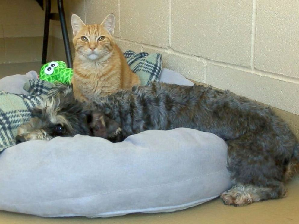 Romeo the Cat and Juliet the Dog: A Love Story with a Happy Ending