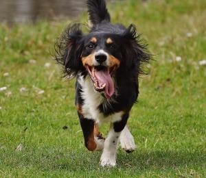 dog-play2