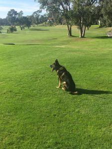 golf8