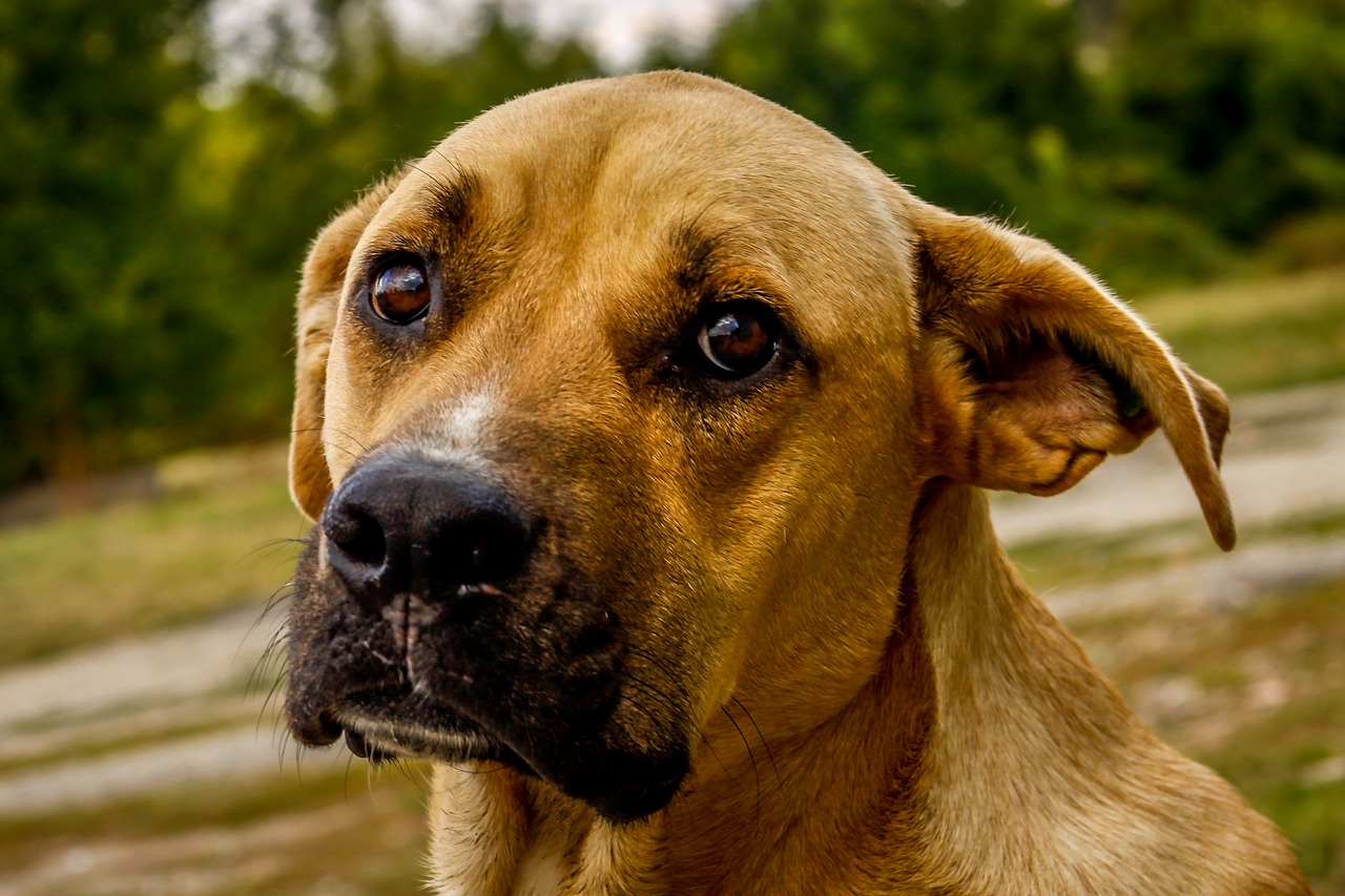 Good Dog Food For Dogs With Cancer
