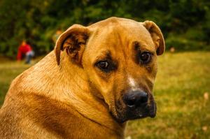dog-face2