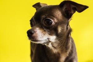 senior-dog1