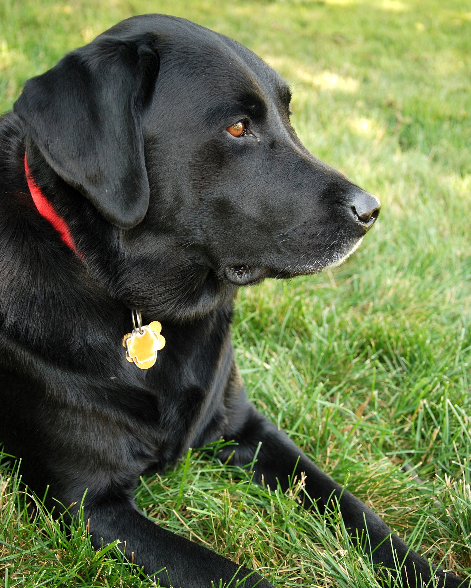 Godogs Project Investigates The Genetics Of Canine Obesity Face Foundation Blog