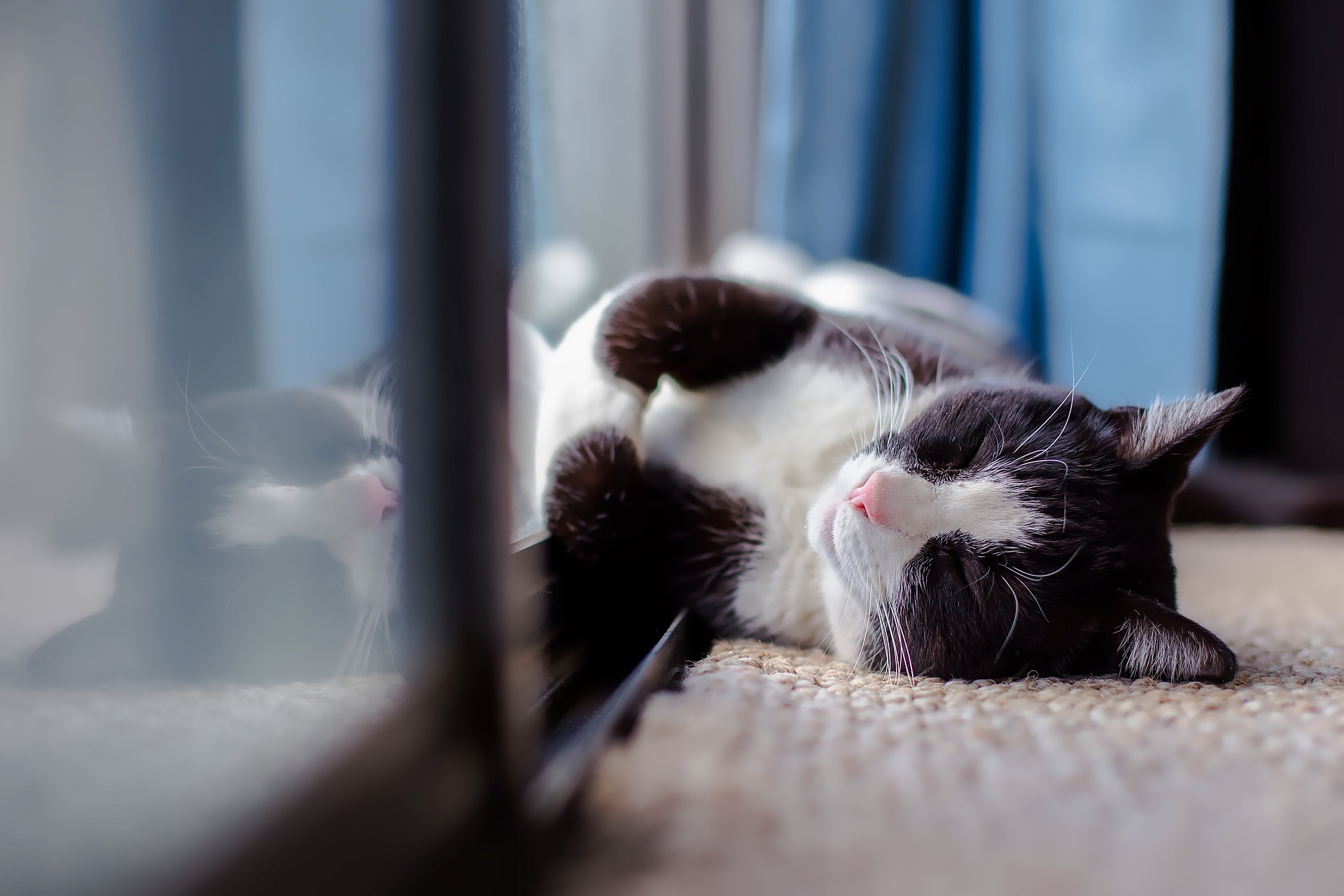 Thyroid Disease In Cats Linked To Chemical Found In Our Homes