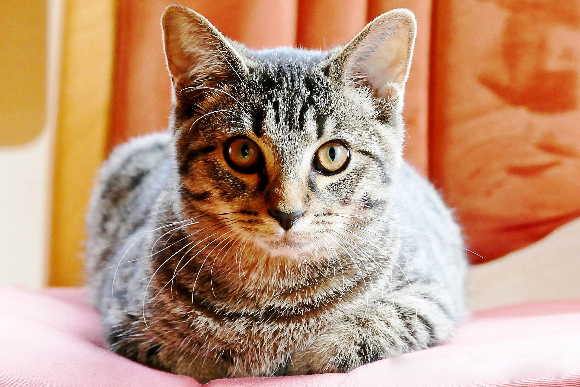how to treat your cat after spaying