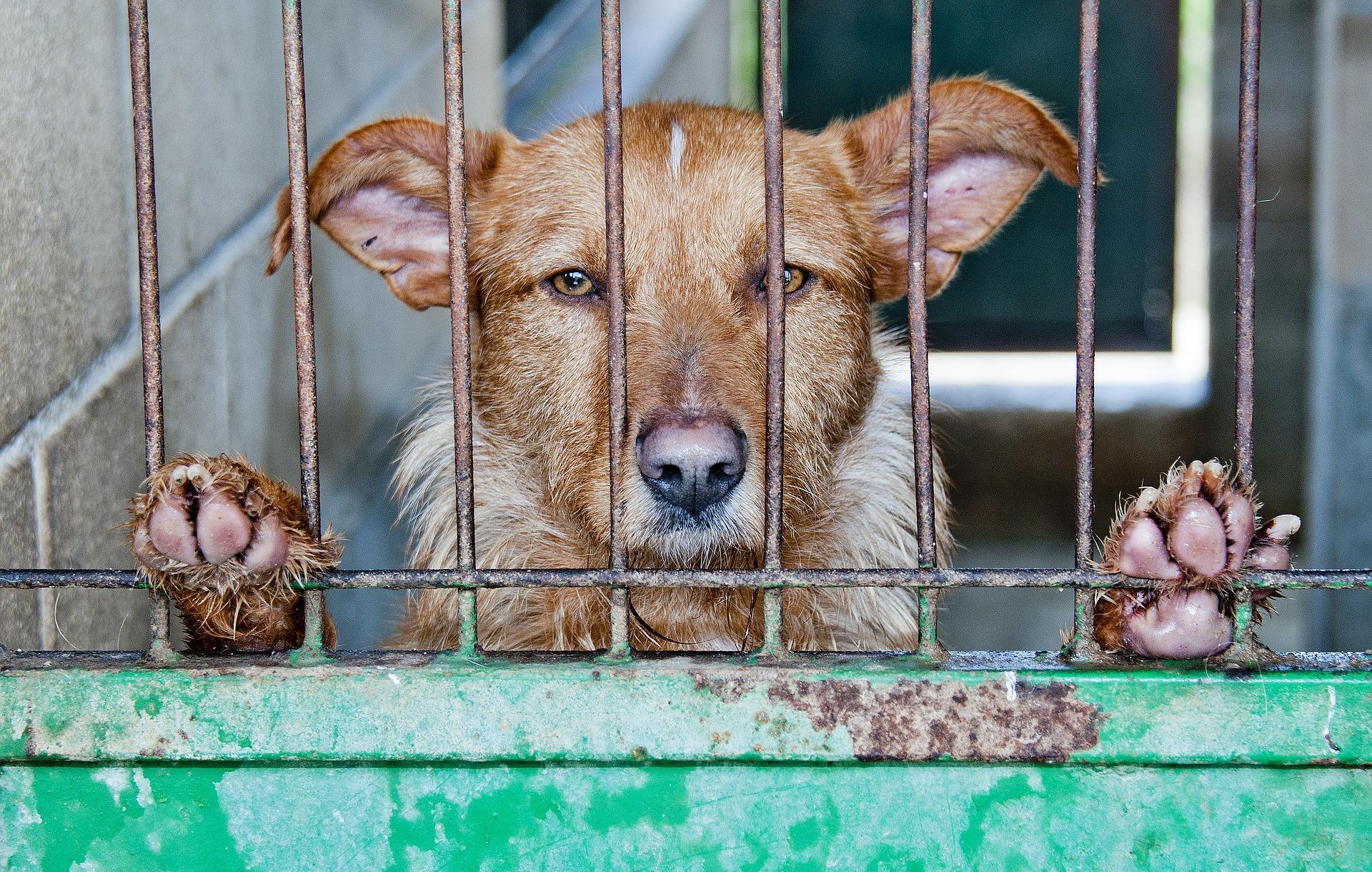 The animal rescue site legitimate