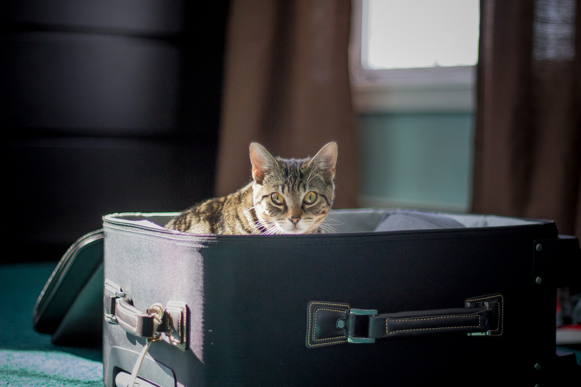 Usda Information For Cat International Travel