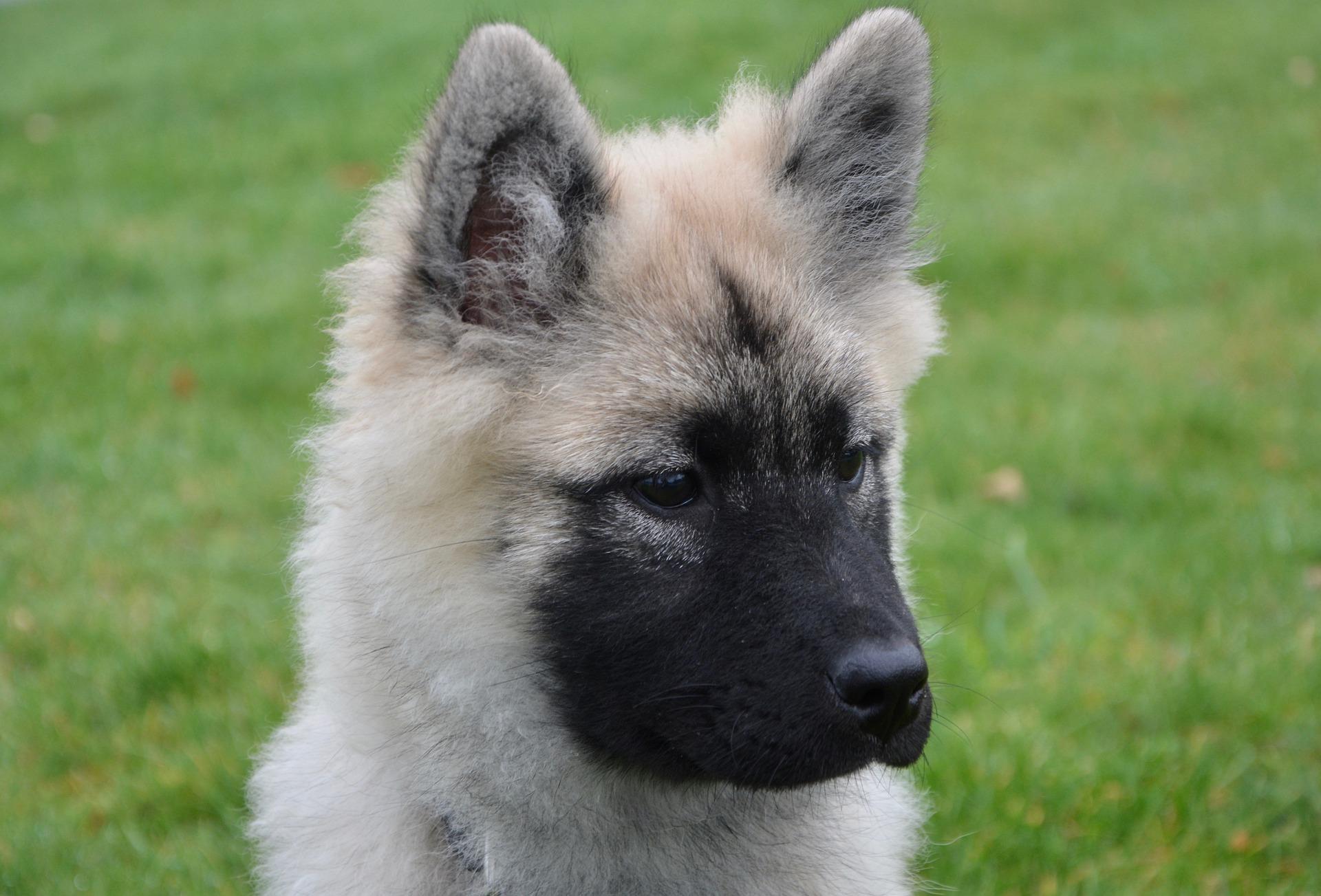 dog news   FACE Foundation