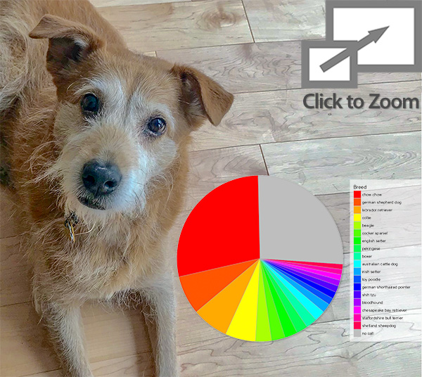 Test Your Dog Breed IQ with the MuttMix Project Survey