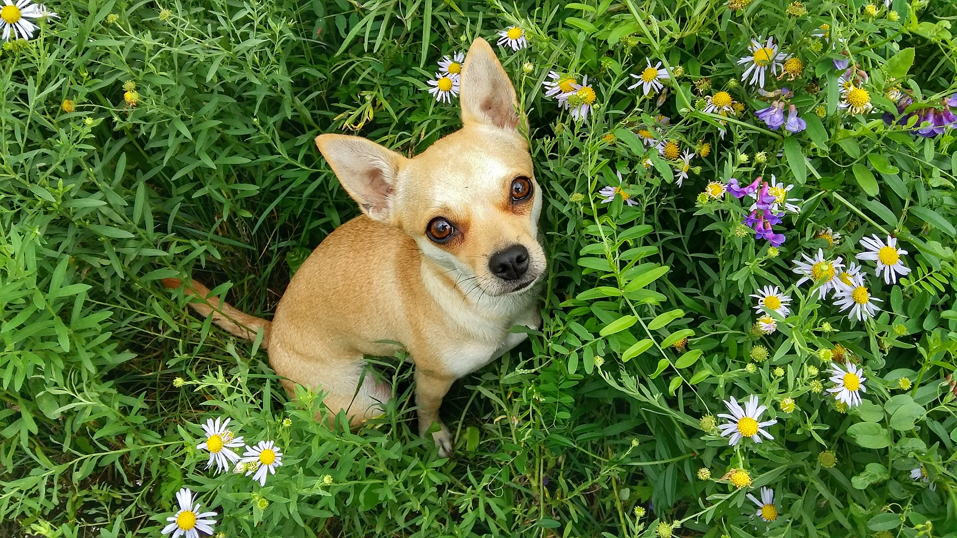 Image result for A Few Pet Safety Tips